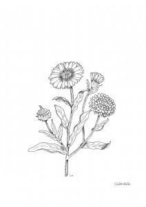piante 9